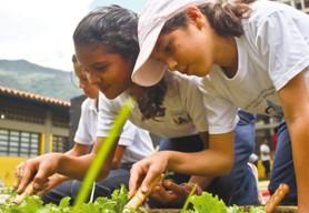 Compañia Nacional de Reforestación (CONARE)