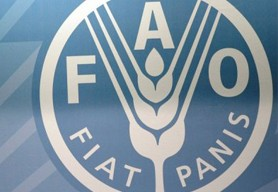 FAO (the Food and Agriculture Organisation of the United Nations)
